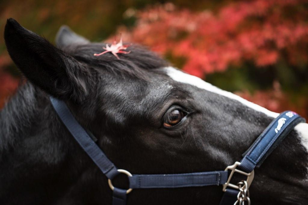 equus-01